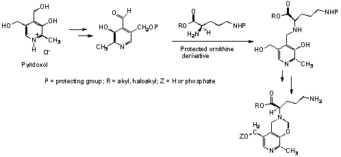 ornithine decarboxylase3